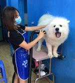 Top 4 Dịch vụ spa thú cưng tốt nhất tại TP. Quy Nhơn, Bình Định